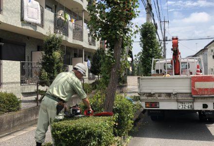 緑地管理:宝積寺公園・街路樹